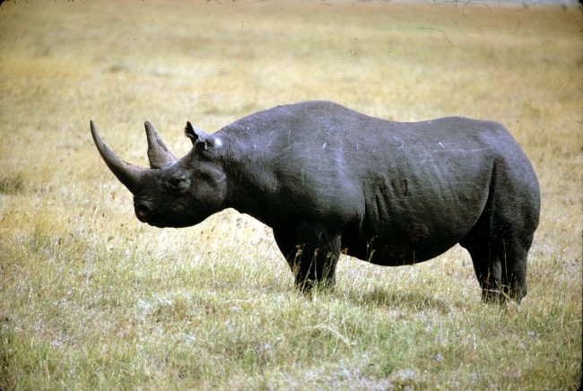 Texas hunters raise money to save black rhinos with permit hunts