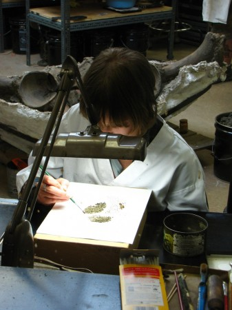 Los Angeles scientists search for microfossils after excavation