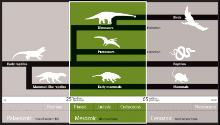 Timeline showing the transition through the Triassic to the Cretaceous period