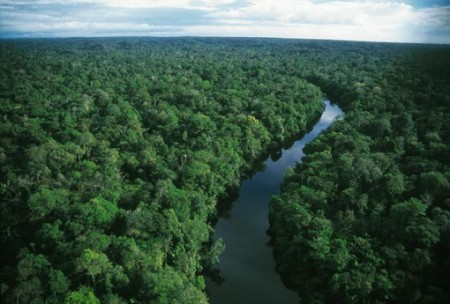 "Amazon Rainforest ""Sacred Science"" Online Screening Free for Two More Days"