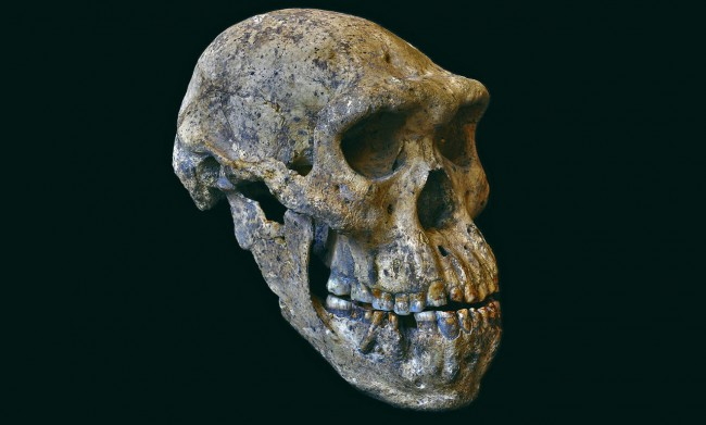 Skull Fossils Found Estimated to Be 1.8 Million Years Old