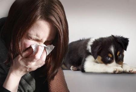 Fatal dog virus