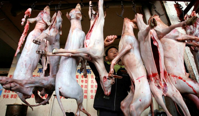 Dog Meat – Does China Want to Export it to the US?