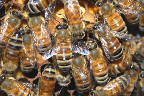 Bees and the Big Swatter from Outer Space