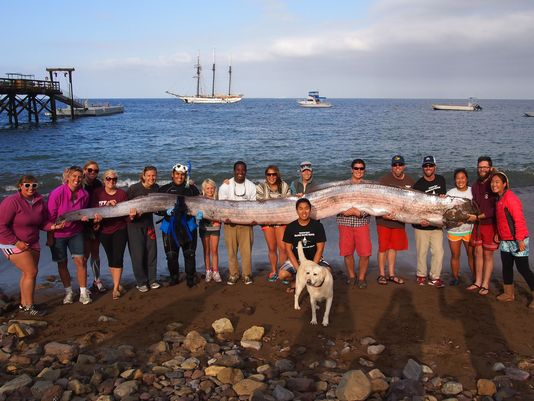 Rare Sea Creature Oarfish Discovered off California Coast