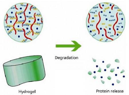 Application of hydrogel substances i drug delivery