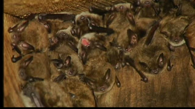 Bats Dying in Record Numbers