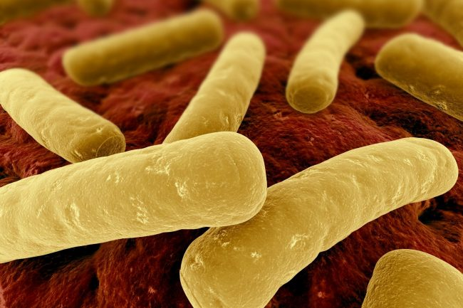 Fecal Transplants and C. difficile