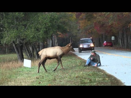 YouTube Viral Video and Doritos Leads to Elk Death Sentence