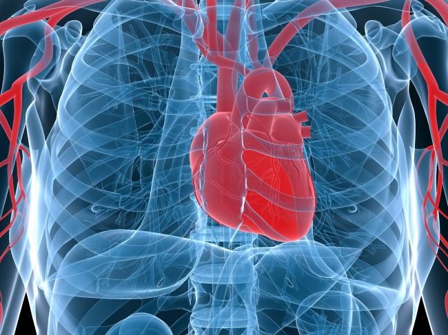 cardiovascular disease, chiropractic, reduce, heart disease