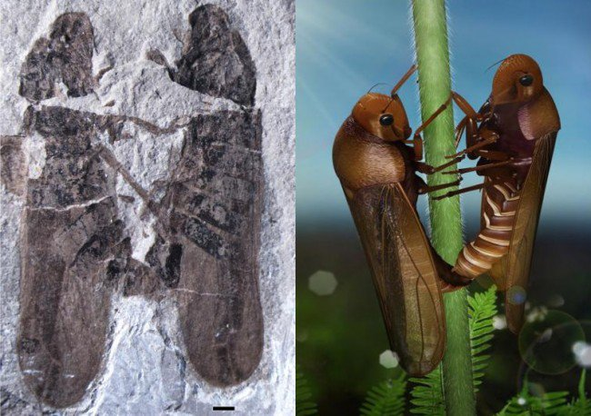 Star-struck froghoppers fossil combo