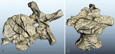 Virtual reconstructions of the vertebral body