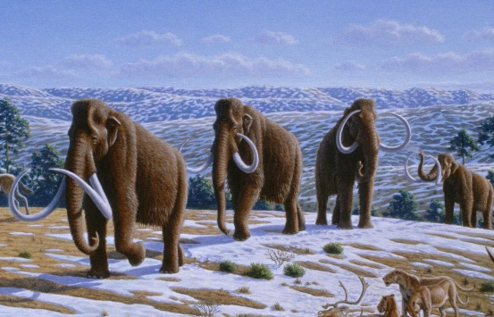 Climate Change affected the Woolly Mammoth