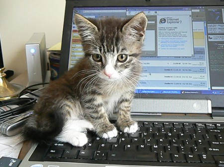 Dell Users Complain: Laptops Smell Like Cat Pee