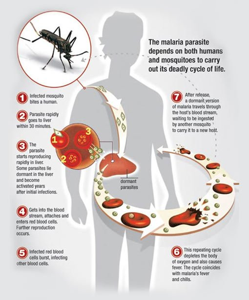 Malaria in the US: Symptoms and Prevention
