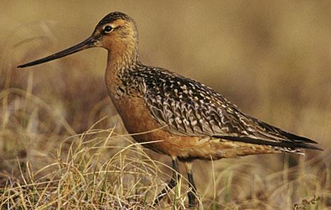 Global Warming Blamed for Earlier Bird Migrations