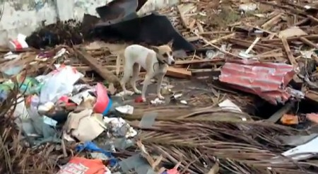 Philippines Disaster Rescue for Animals