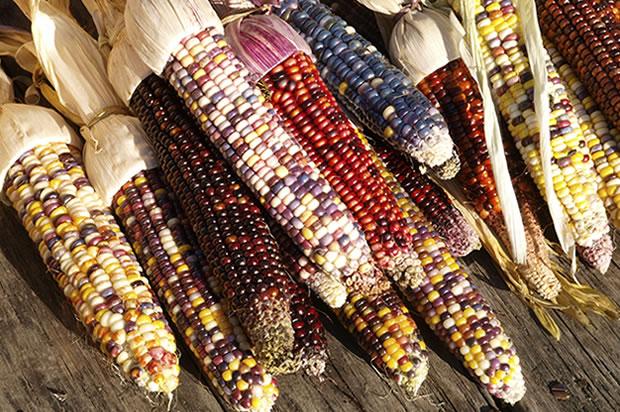 Thanksgiving, corn, omit, health