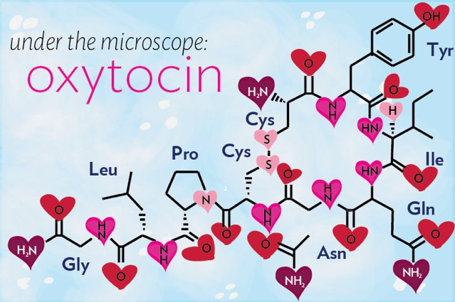 Oxytocin is Love