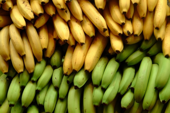 Bananas live from human not natural growth.