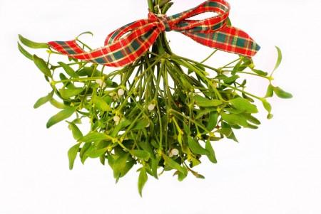 Christmas mistletoe hanging