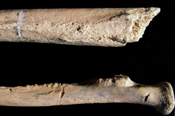 Paranthropus Boisei bones discovered