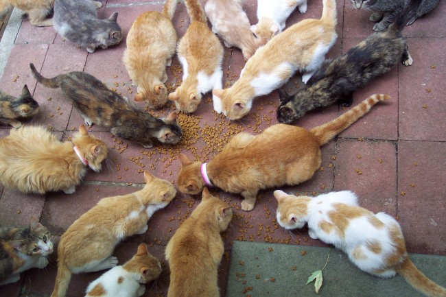 Japan Cat Burglar Stole $185,000 Worth of Goods to Feed 120 Cats