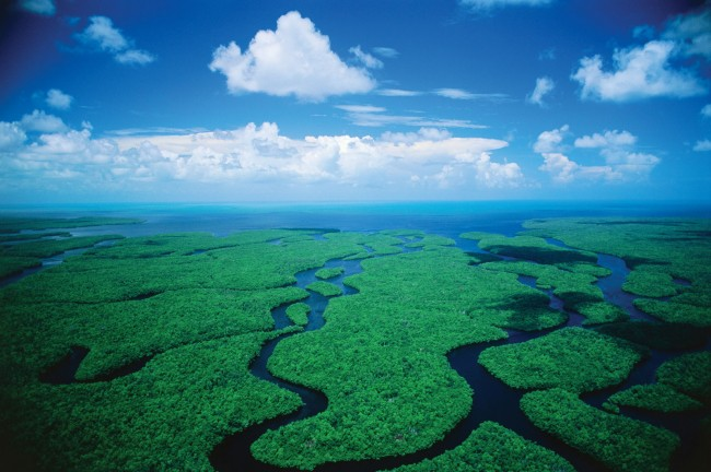 Everglades National Park, u.s., wildlife