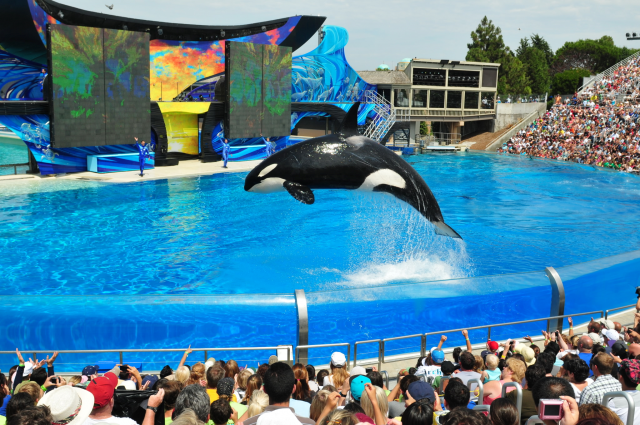 Sea World, u.s., business, struggle