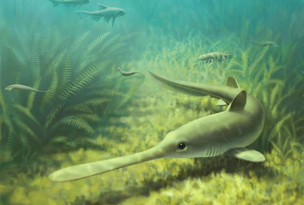 310-Million-Year-Old Bandringa Shark Nursery Found in Illinois