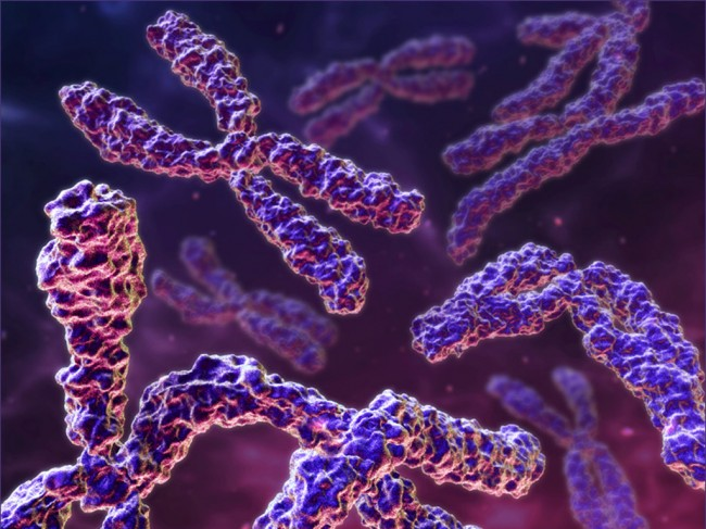 Chromosomes in Men Are Not Going Extinct