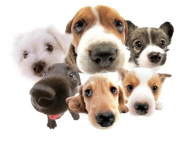 dogs, u.s., health, science