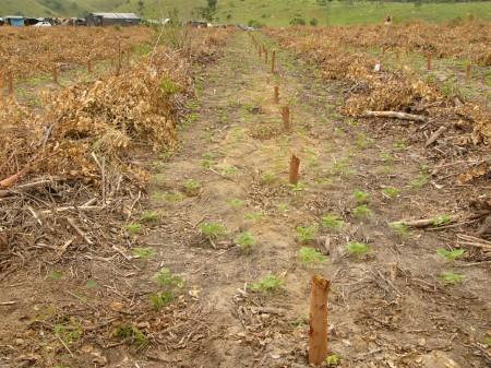 Land reform, South Africa, world