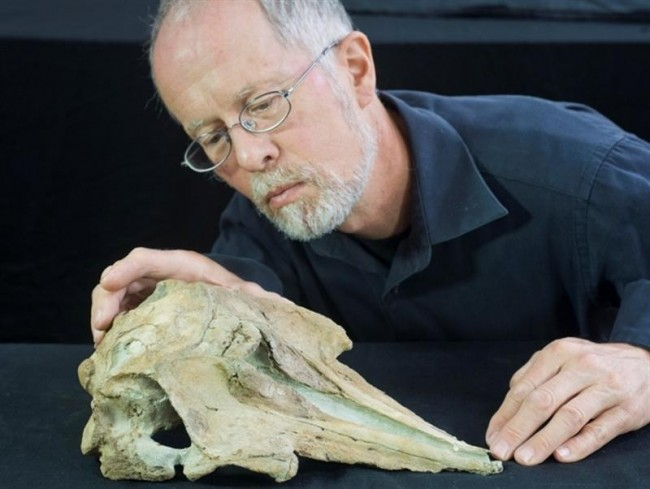 Dolphin Fossil Missing Link