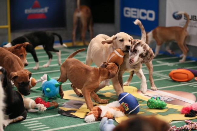puppy bowl, animal planet