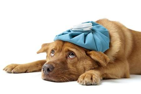 Plastic Surgery and Fake Testicles Go to the Dogs