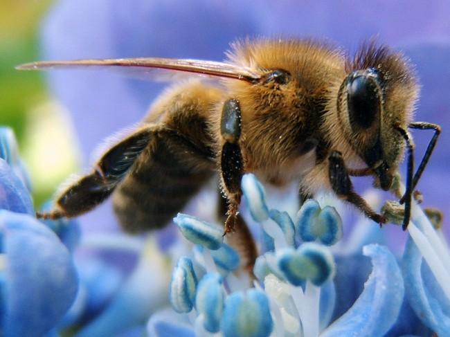 zombie bees