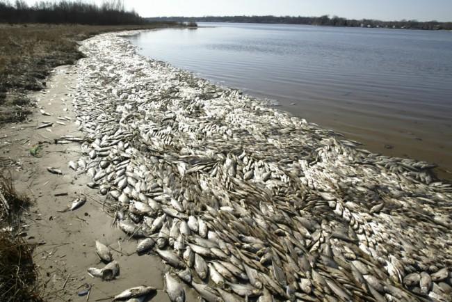 Nevada marina has 100k dead fish guardian liberty voice for Sparks marina fishing