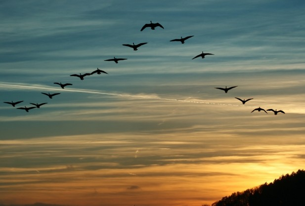 Why Birds Fly in V Formation: Finally, an Explanation