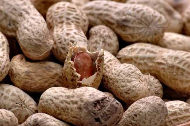 Peanut Allergy Therapy for Children?