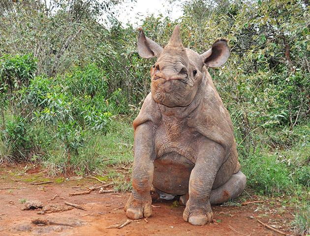 rhinoceros, science, u.s., world
