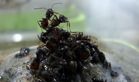 Ants can build rafts to escape floods. These are not boats made of wood or leaves, but of fellow ants behaving in a collective structure for the greater good of the nest