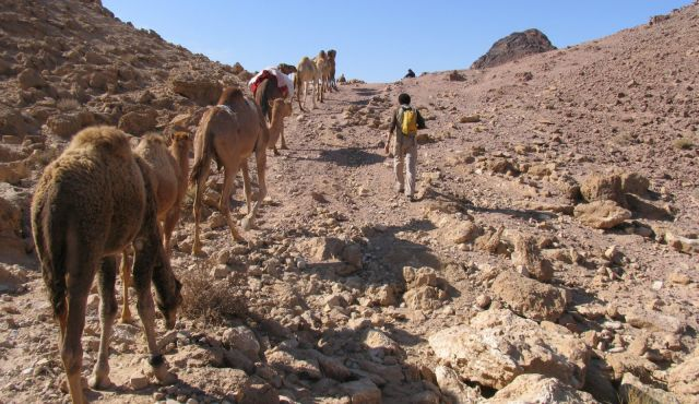 Archaeologists Use Carbon Dating on Camel Bones, Say Bible Is Wrong
