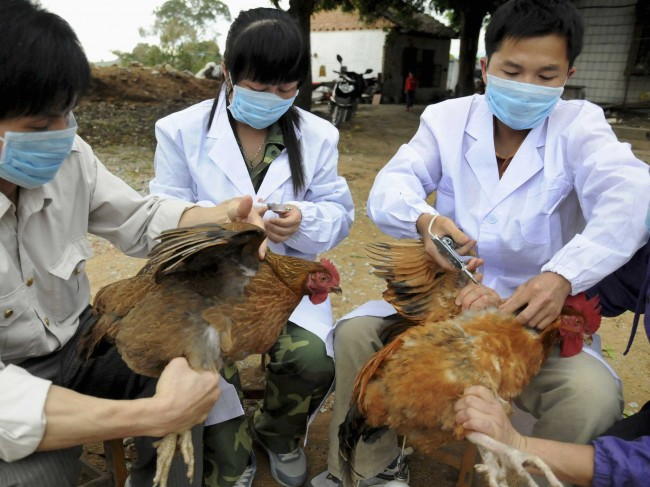 Bird Flu Virus H10N8 Claims First Victim in China, health, flu