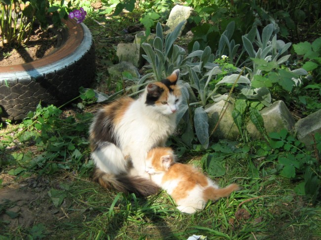 Calico Cat Genetics May Help Humans With Obesity