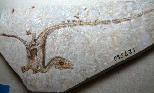 Fossils of Chinese dinosaurs suggest Pompeii-type volcanic eruption: Study