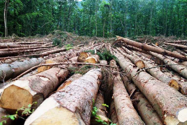Deforestation, narco-effect