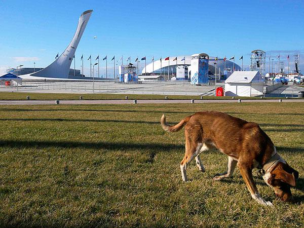 Sochi Olympics Controversies Compared