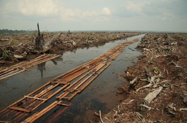 deforestation being mapped for public