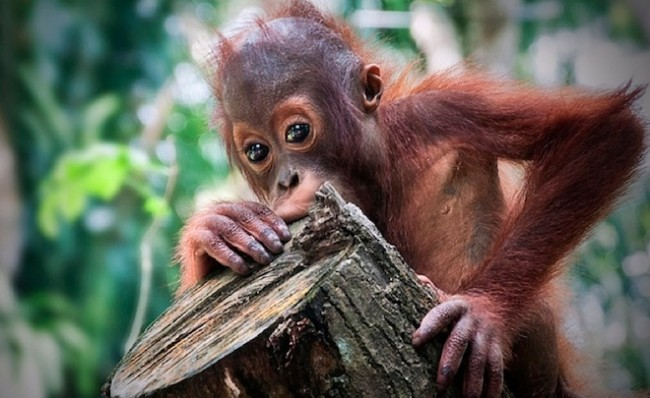 Holocene Extinction, science